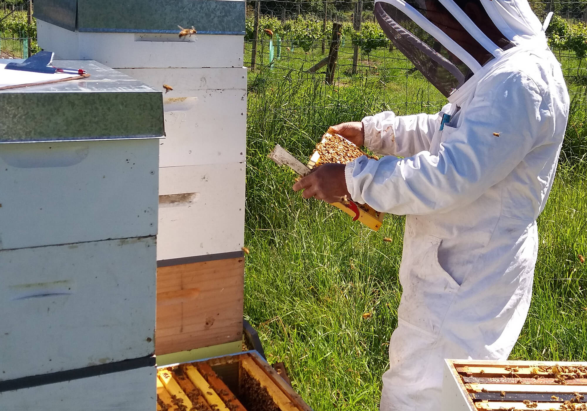 New Zealand Bee Keeping Industry