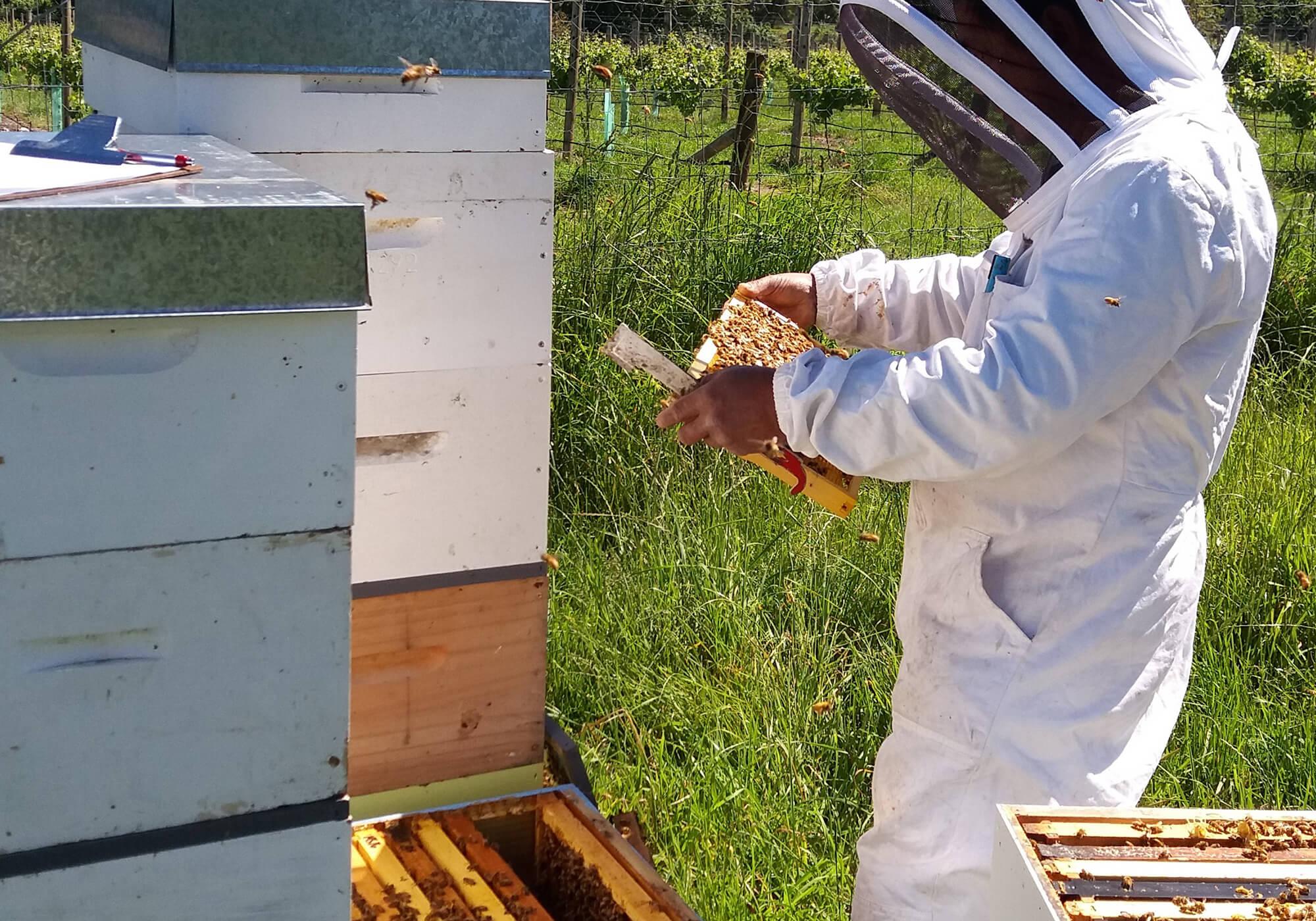 New Zealand Bee Keeping Industry