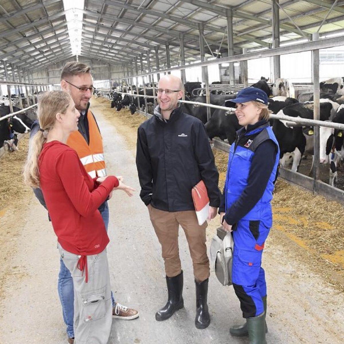 Polish dairy index
