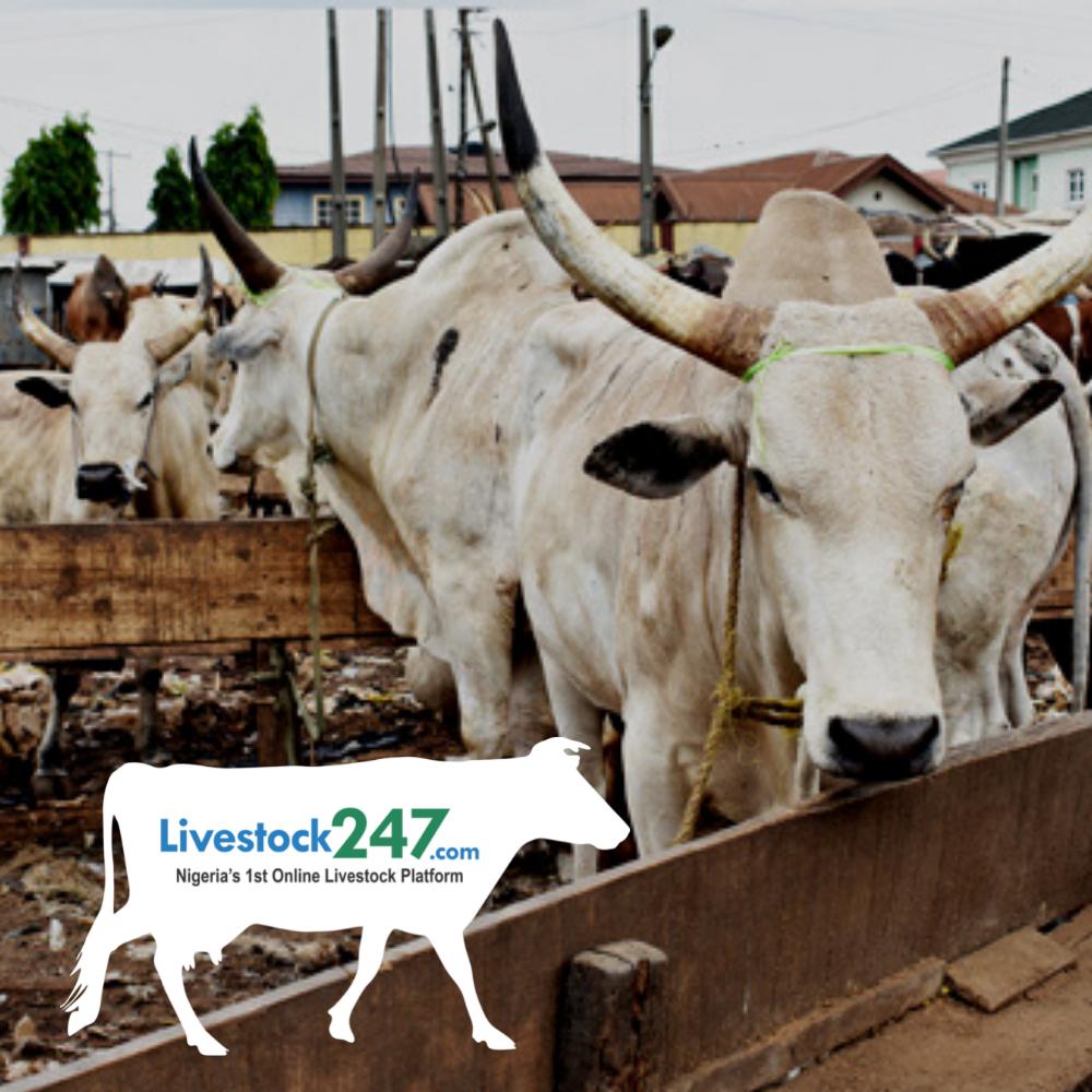 Livestock 247